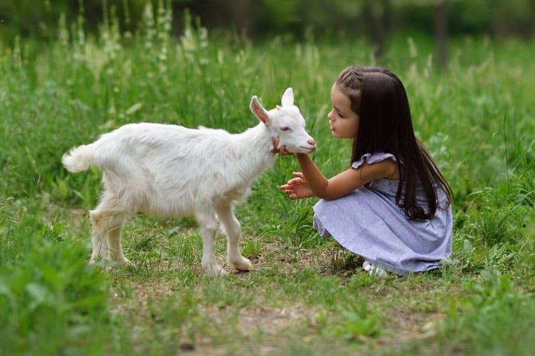 girl with goat denver colorado