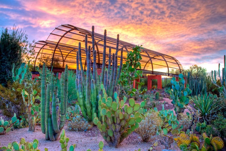 desert botanical gardens, phoenix arizona