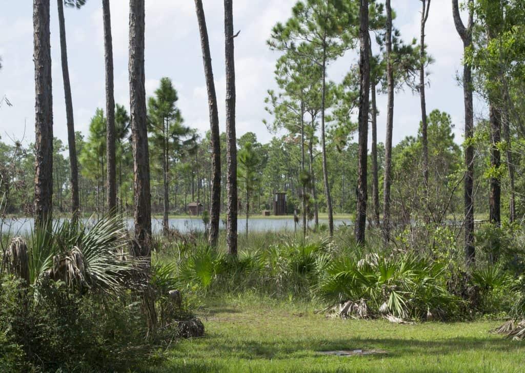 Everglades National Park Long Pine Key borrow pit.