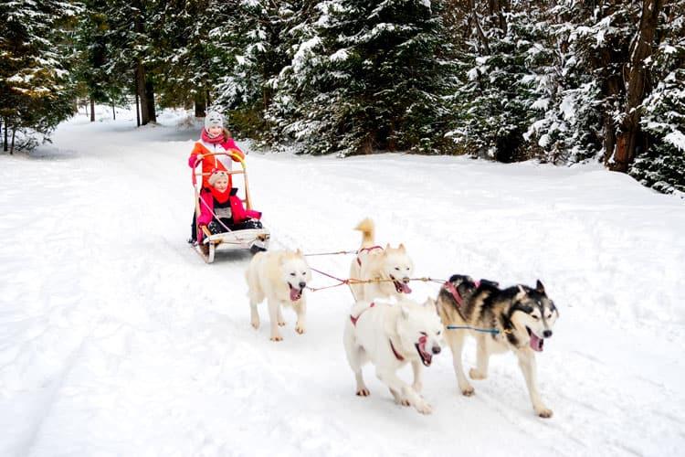 kids dog sledding in small town colorado