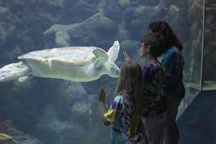 family looking at sea turtle at florida aquarium