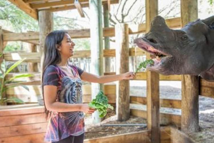 woman feeding rhino at ZooTampa