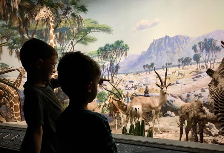 children looking at museum exhibit