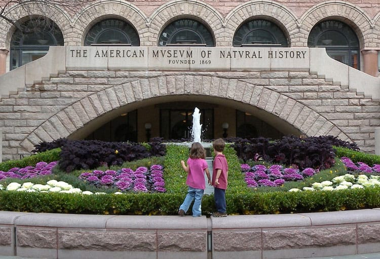 The American Musuem of Natural History