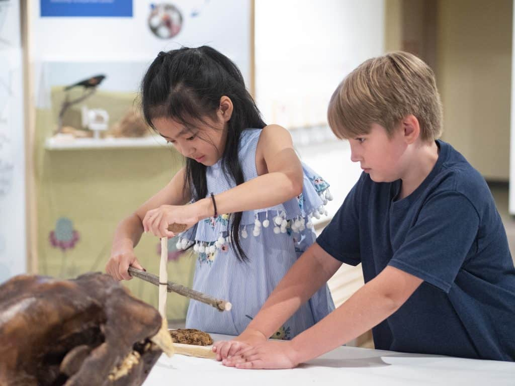 children at the Museum of Natural History at CU Boulder