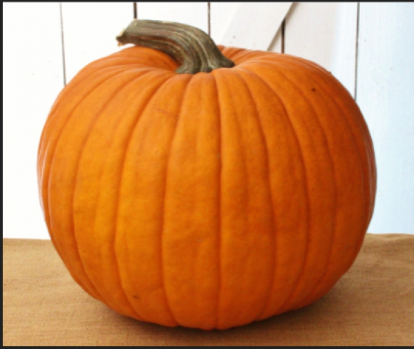 BabyQuip - Baby Equipment Rentals - Pumpkin to carve - Pumpkin to carve -